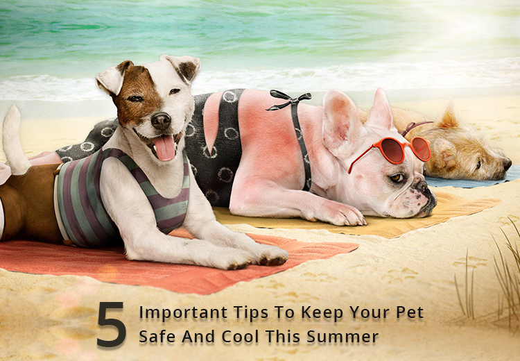 Keep Your Pet Safe And Cool This Summer