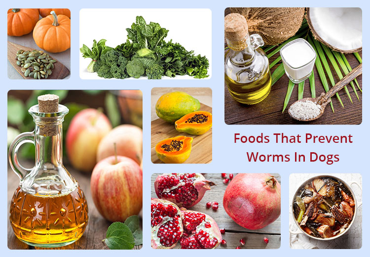 Foods That Prevent Worms In Dogs