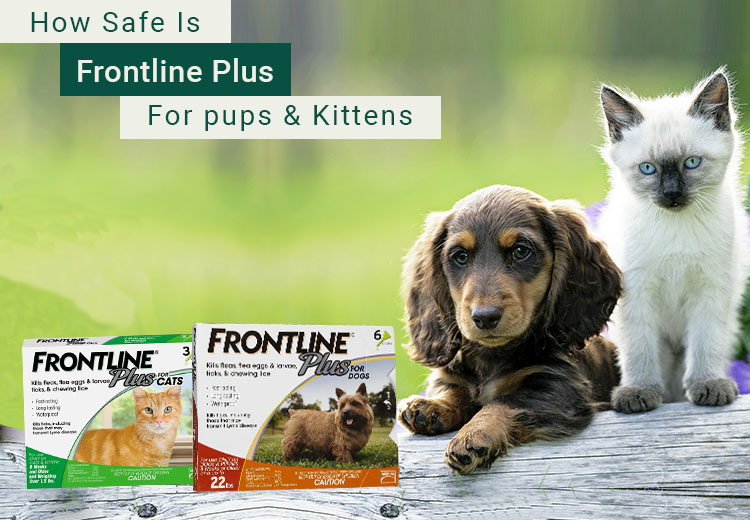 Safe Is Frontline Plus For Pups and Kittens