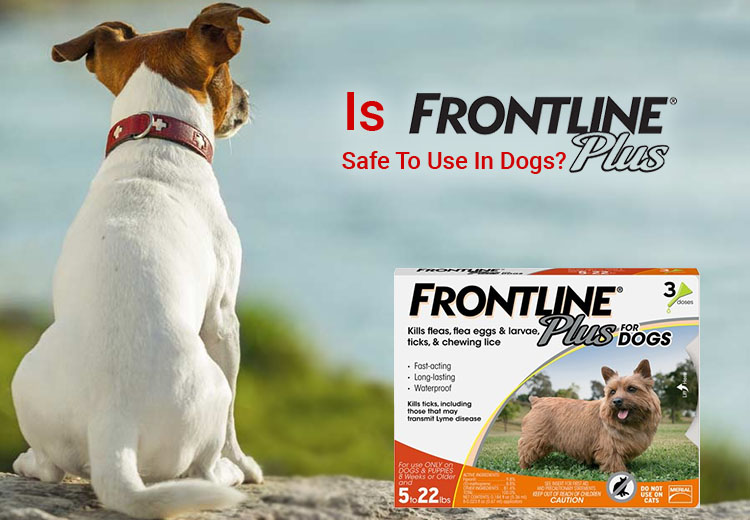 Frontline Plus Safe To Use In Dogs