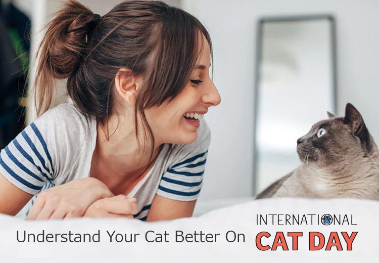 petcaresupplies-international-cat-day