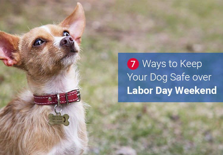 Dog Safe over Labor Day Weekend