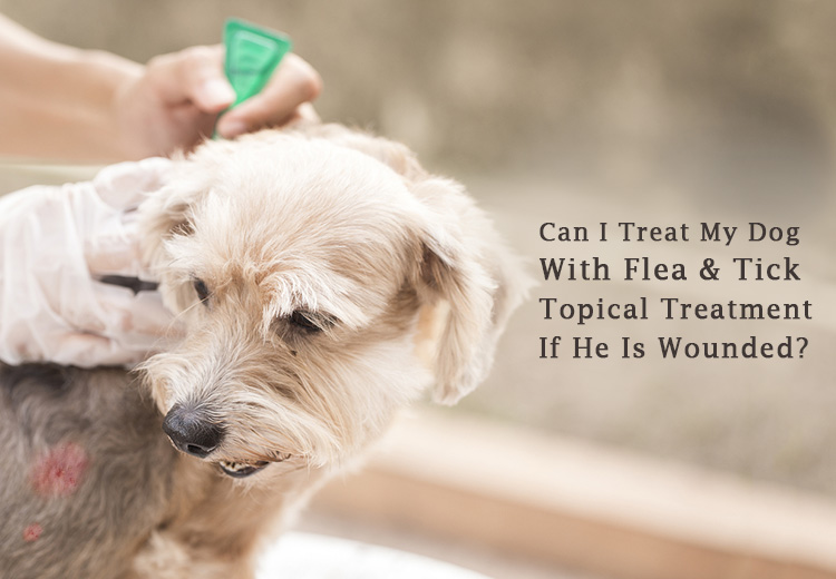 treat wounded dog with flea and tick treatment