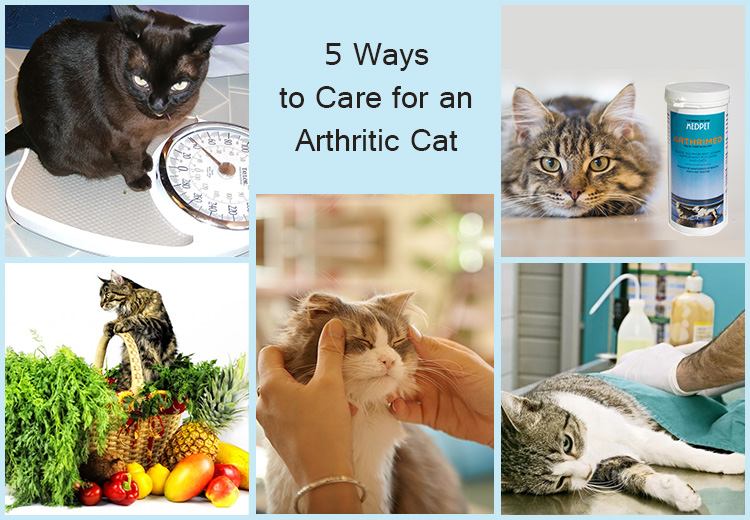ways to care for an arthritic cat