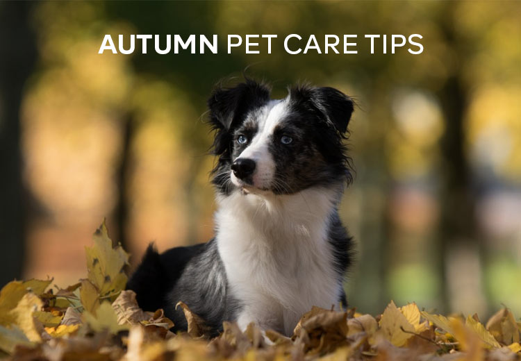 PCS-Autumn-Pet-Care-Tips