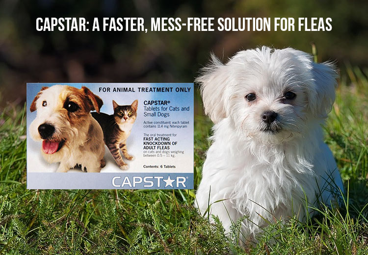Capstar-Mess-free Solution for Fleas