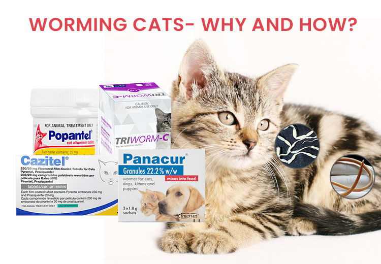 deworming treatments on cats