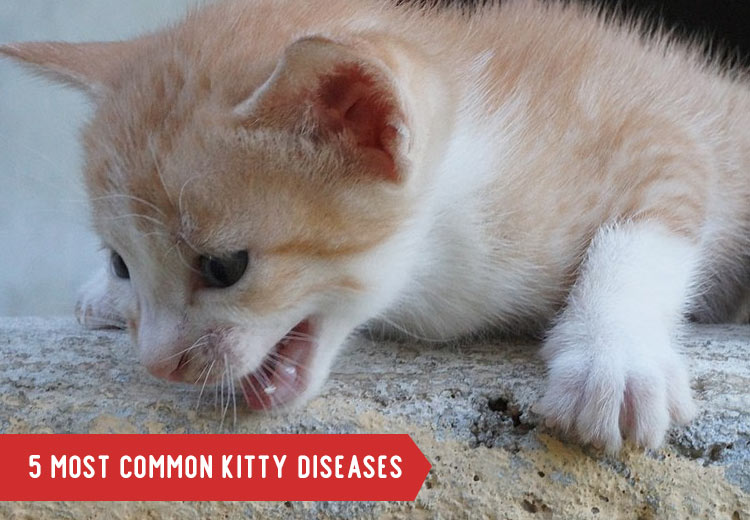 Most-Common-Cat-Dieases