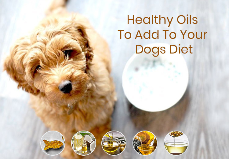 Healthy Oils To Add To Your Dogs Diet