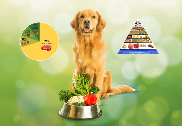 Nutrition for Pet