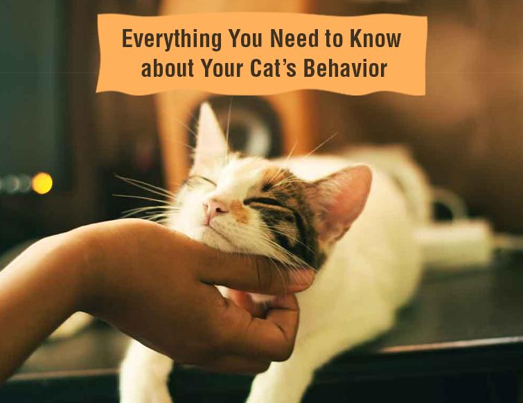 Cat's Behaviour
