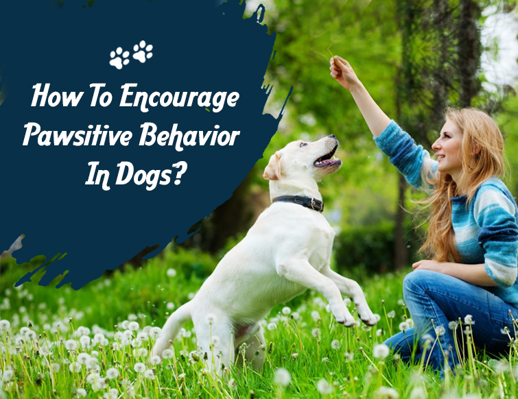 Pawsitive behaviour in dogs