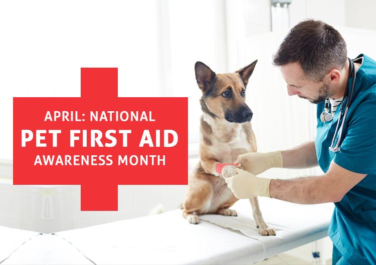National Pet First Aid Awareness Month
